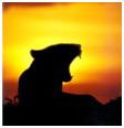 Roaring Lion L